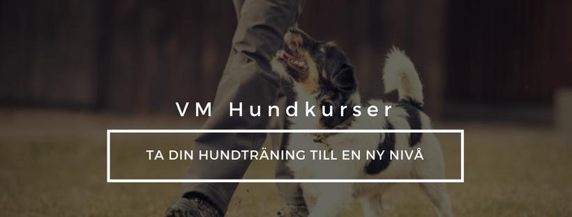 Hundkurser i tävlingslydnad, rallylydand, HtM, friskvård för hund. Uppsala, Gävle, Tierp