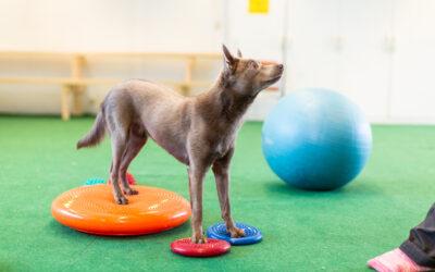 Styrka, balans och kroppskontroll för den aktiva hunden