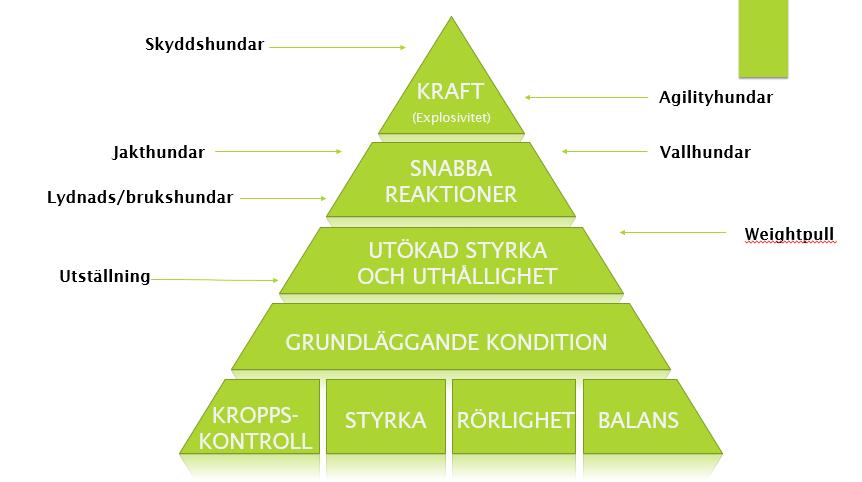 träningspyramid