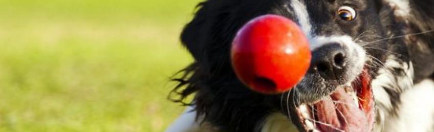 cirkelträning hund