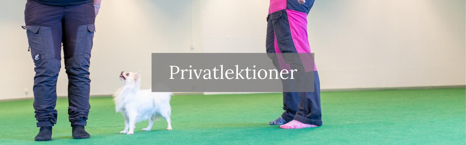 privatträning - hund - privatlektion - Uppsala - Gävle - Tierp