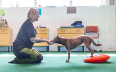 Friskvård – mer än bara en starkare hund!
